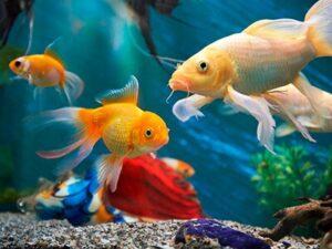 Aquarios e Peixes